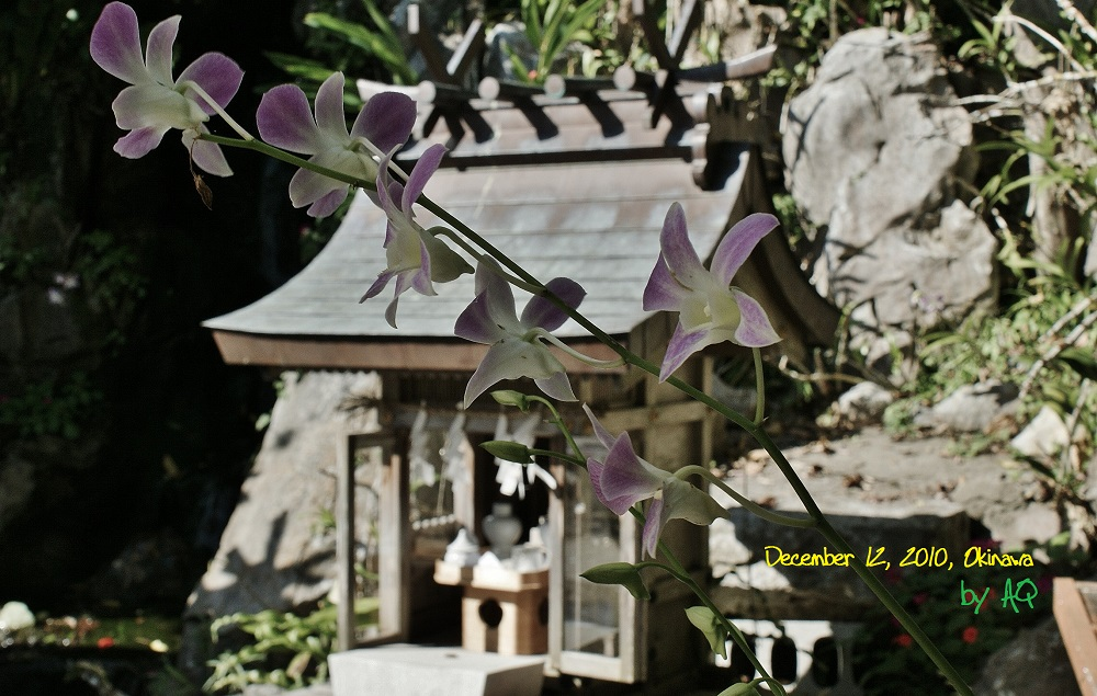 Precious Flowers in Hidden Places, Okinawa